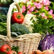 Fresh organic vegetables in the garden — Stock Photo