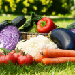 Fresh organic vegetables in garden — Stock Photo #29871781