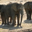 Group of African elephants in natural environment — Stock Photo #30353417