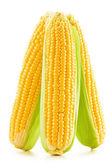 玉米被隔绝在白色背景上的耳朵 — 图库照片