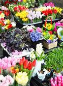Pouliční stánek s výběrem květin — Stock fotografie