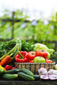 Fresh organic vegetables in wicker basket in the garden — Foto de Stock