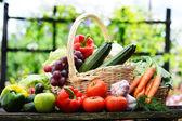 Fresh organic vegetables in wicker basket in the garden — Stock Photo