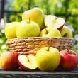Organic apples in the garden. Balanced diet — Stock Photo #50353759