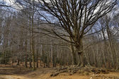 Mountainous landscape of winter trees — Stock Photo