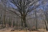 Bergachtig landschap van winter bomen — Stockfoto