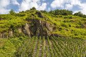 Vinhas beilstein — Foto Stock