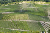 Vineyards Beilstein — Foto Stock