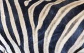 Zebra huid textuur — Stockfoto