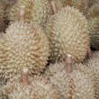 Fresh durians fruits — Stock Photo
