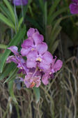 Orchid flower blossom — Stock Photo