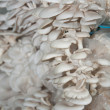 Stock Photo: Rice straw mushroom planting
