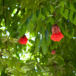 Red flower on tree — Stock Photo