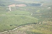 Landwirtschaft-feld - blick vom hubschrauber — Stockfoto