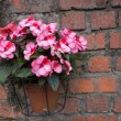 Pink flower in pot on brick wall — Stock Photo