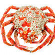 Spider Crab — Stock Photo #13136175