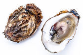 Two oysters — Stock Photo