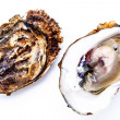 Two oysters — Stock Photo #14260663