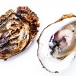 Stock Photo: Two oysters