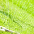 Sprinkler head watering green grass — Stock Photo