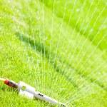 Sprinkler Kopf Gießen grünen Rasen — Stockfoto