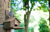 Güvercin — Stok fotoğraf