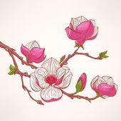 Rosa blühende magnolie — Stockvektor