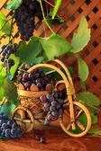 Gran cosecha de uva madura-vid sobre una mesa — Foto de Stock