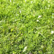 Stock Video: Grass 1