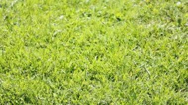 Ball on grass 1 — Stock Video