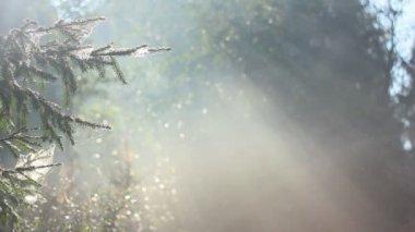 Fog 4 — Stock Video