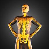 Human radiography scan — Stock Photo