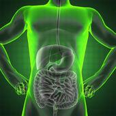 Human entrails radiography — Stock Photo