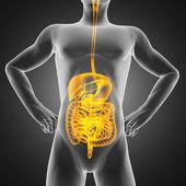 Radiografía de las entrañas humanas — Foto de Stock