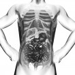 Human entrails radiography scan - Stock Photo