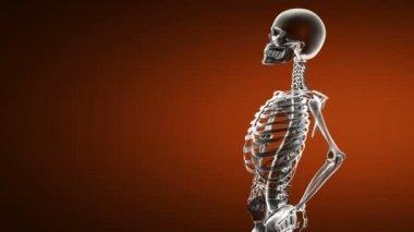 Loop rotate skeleton — Stock Video