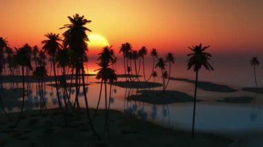 Rising sun and palms at ocean — Video Stock
