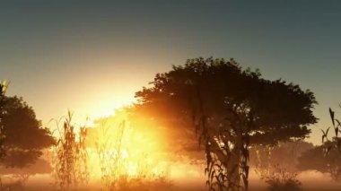 Árvores e sol brilhante da névoa — Vídeo stock
