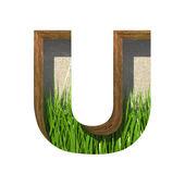 Vettore erba tagliate figura u. incolla a qualsiasi sfondo — Vettoriale Stock