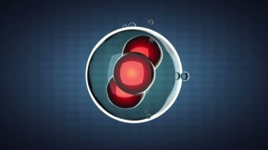 Loop rotate cell division illustration — Video Stock