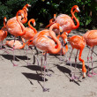 Pink flamingo in zoo - Stock Photo