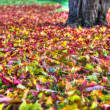 Autumn leaves Background in HDR High Dynamic Range — Stock Photo #25955997