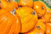 Pumpkins Lined up in HDR High Dynamic Range — Stock Photo