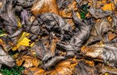 Colorful Autumn Leaves Background in HDR High Dynamic Range — Stock Photo