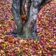 Autumn leaves Background in HDR High Dynamic Range — Stock Photo