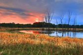 Woodlands and Sunrise in High Dynamic Range — Stock Photo