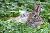Jack Rabbit in HDR — Stock Photo