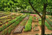 Flower Nursery in HDR — Stock Photo