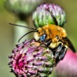Colorful Bee in HDR — Stock Photo