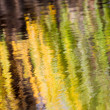 Autumn Reflections of a willow tree — Stock Photo